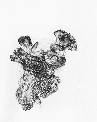 Algalbloom Blaualge Fotografie Pigmrentprint 50x40cm